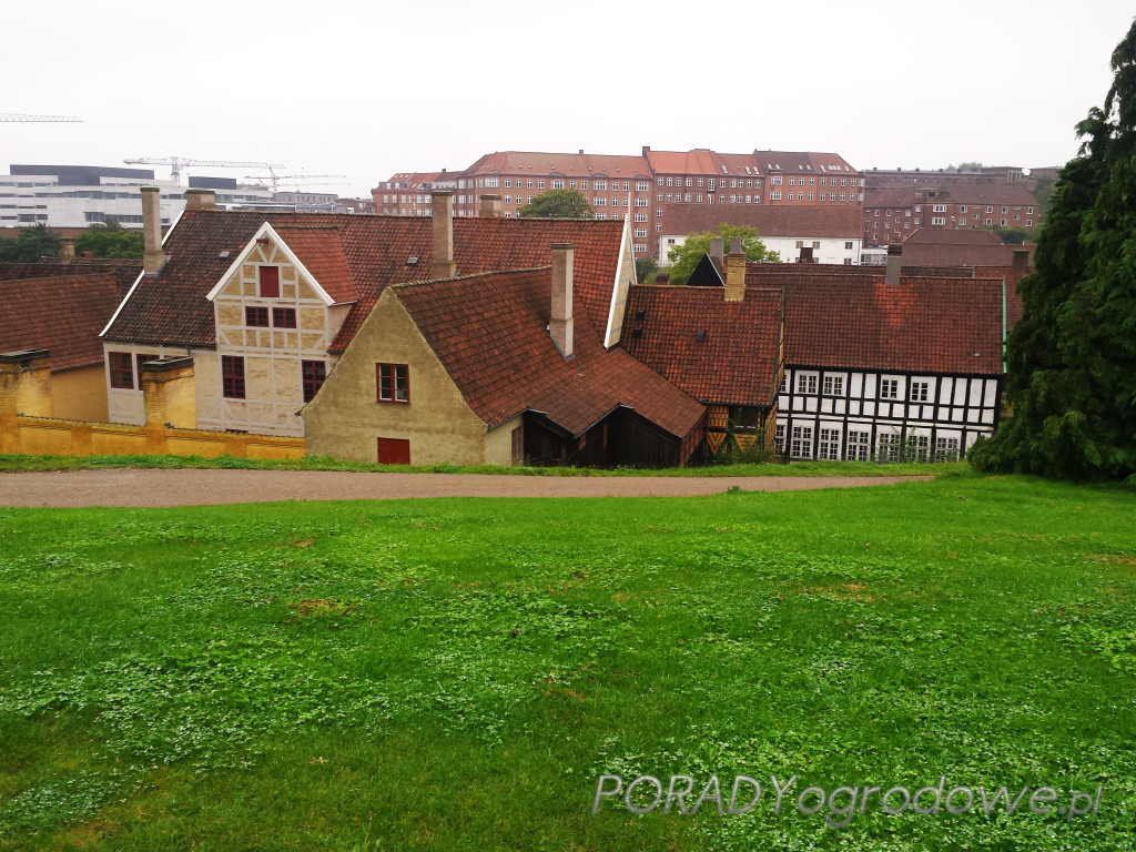 stare miasto ogród botaniczny