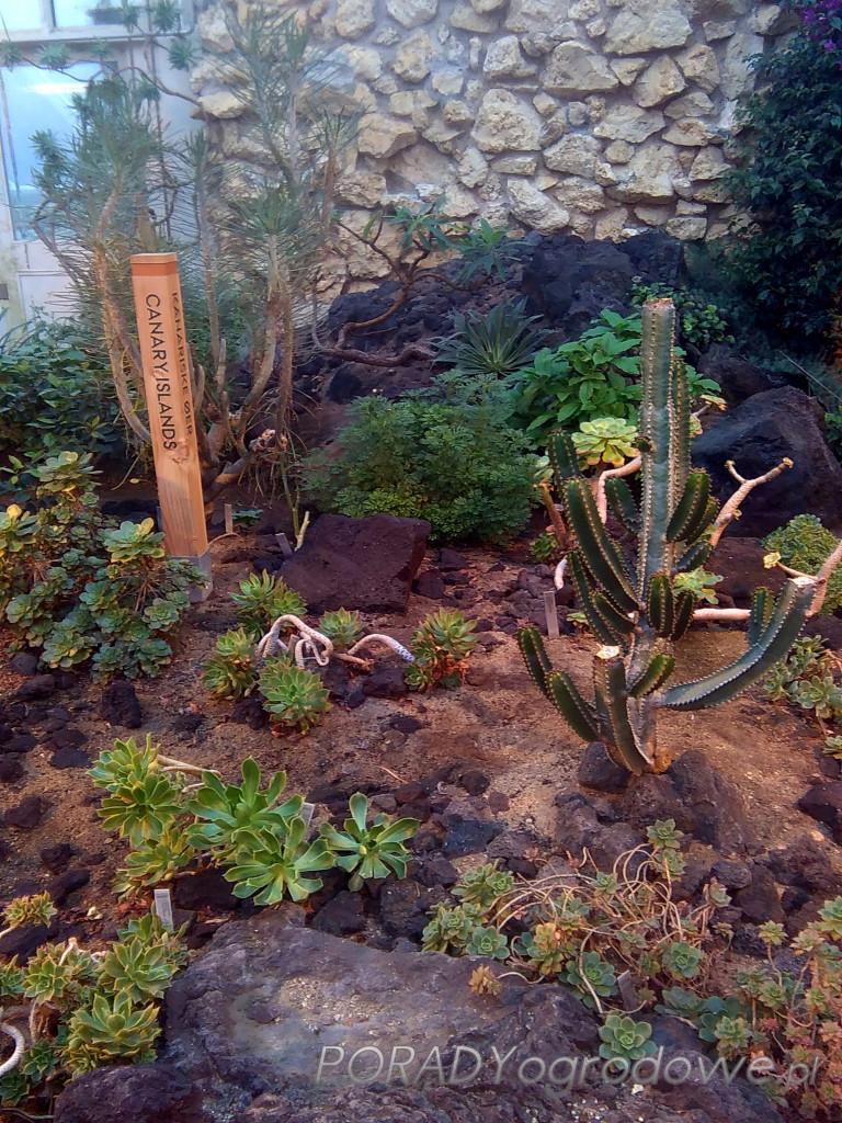 ogród botaniczny aarhus
