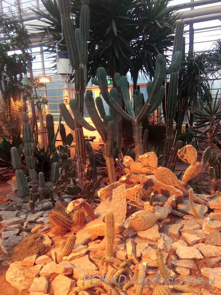 ogród botaniczny dania