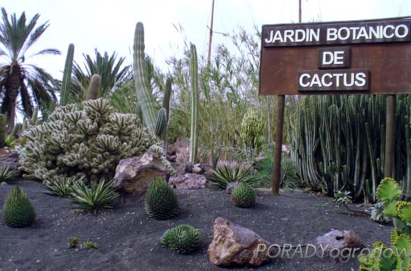 ogród_kaktusów_największy