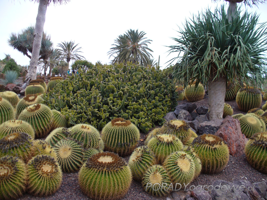 ogród kakatusów