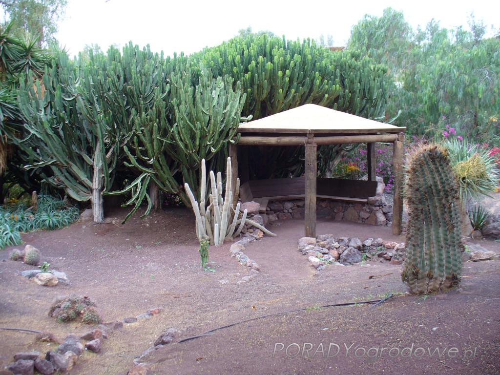 ogród botaniczny Fuertaventura