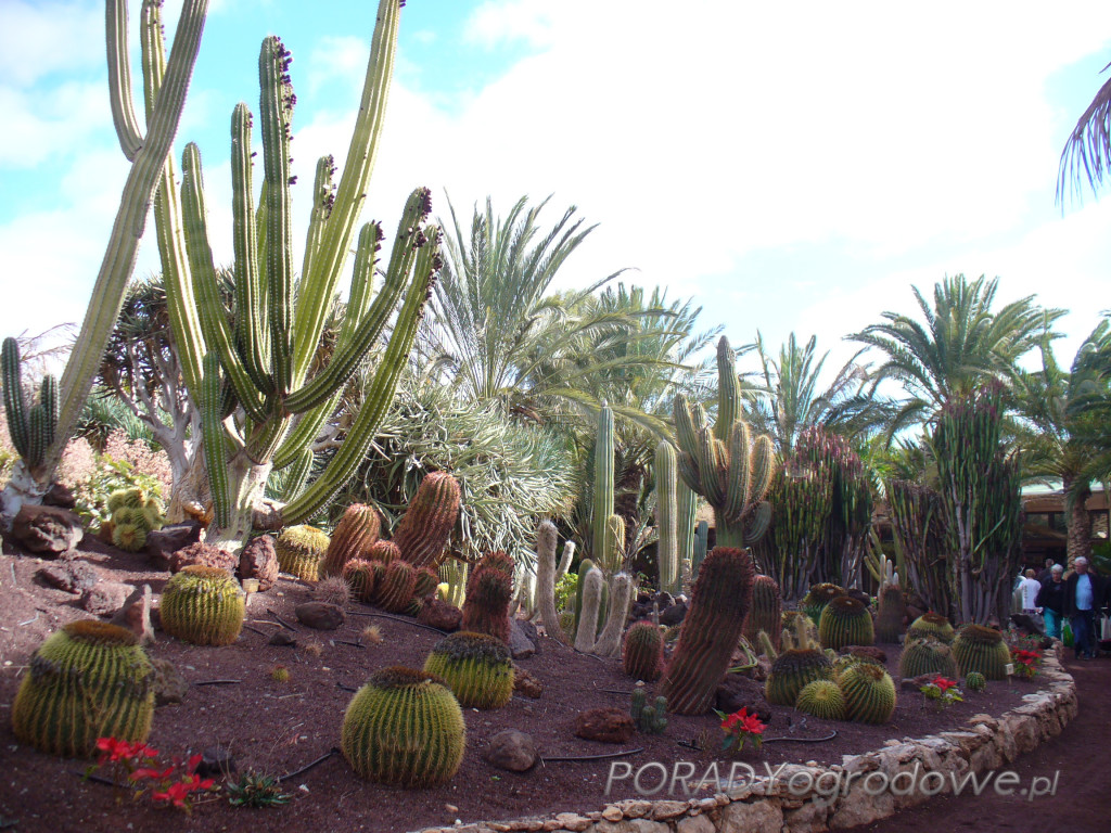 ogród kaktusów