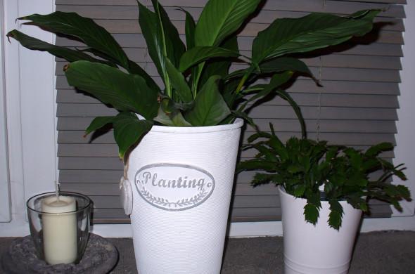 pielęgnacja roślin zimą