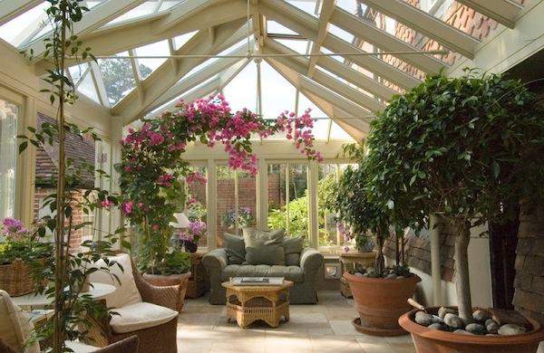 rośliny pokojowe w zimie