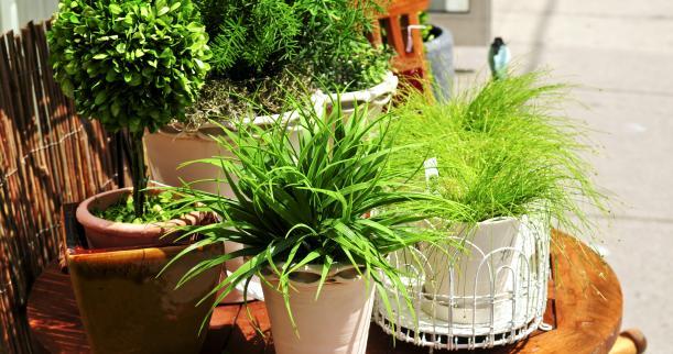 rośliny pokojowe zimą