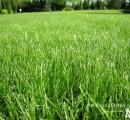 Regeneracja trawnika wiosną