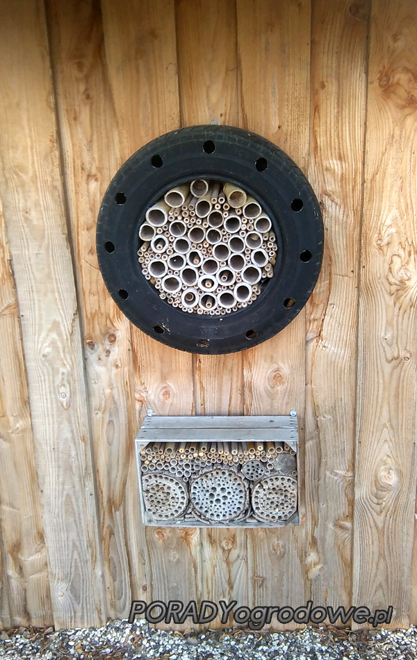 insects hotel