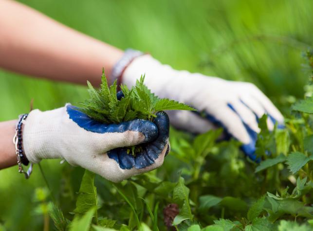 ekologiczna_ochrona_w_ogrodzie