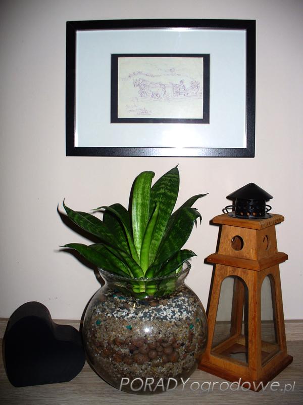 roślina do łazienki