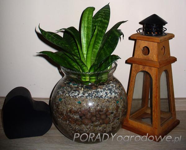 roślina_do_łazienki