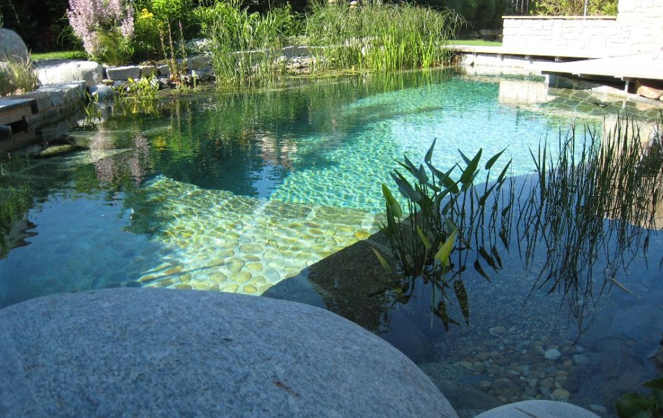basen naturalny