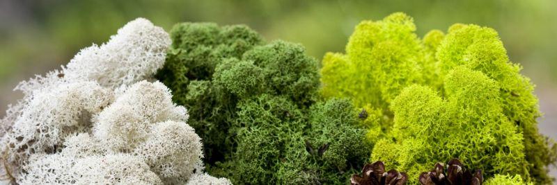 - zielone ściany z mchu