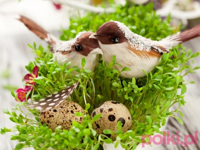 porady ogrodnicze miniature