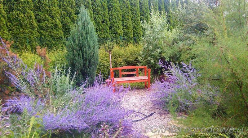 blog ogrodniczy lublin