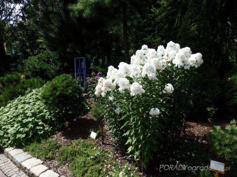 porady ogrodnicze