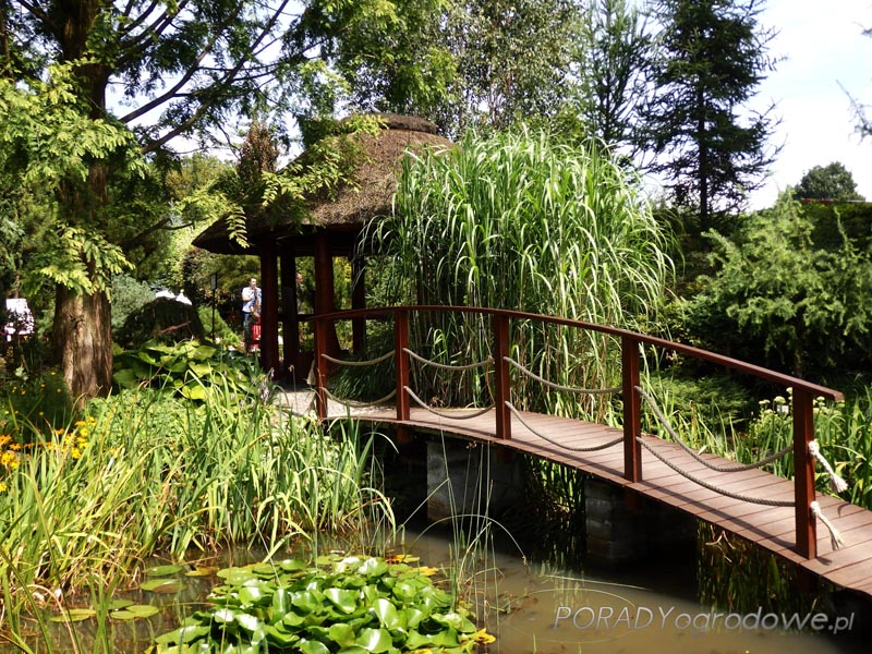 blog ogrodniczy