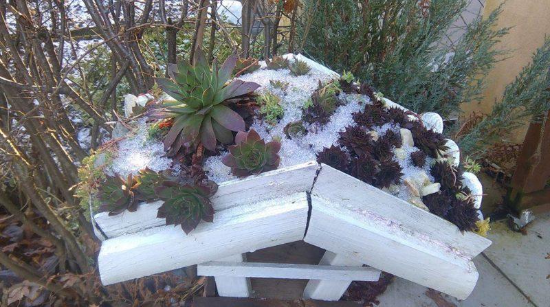 porady ogrodnicze karmnik