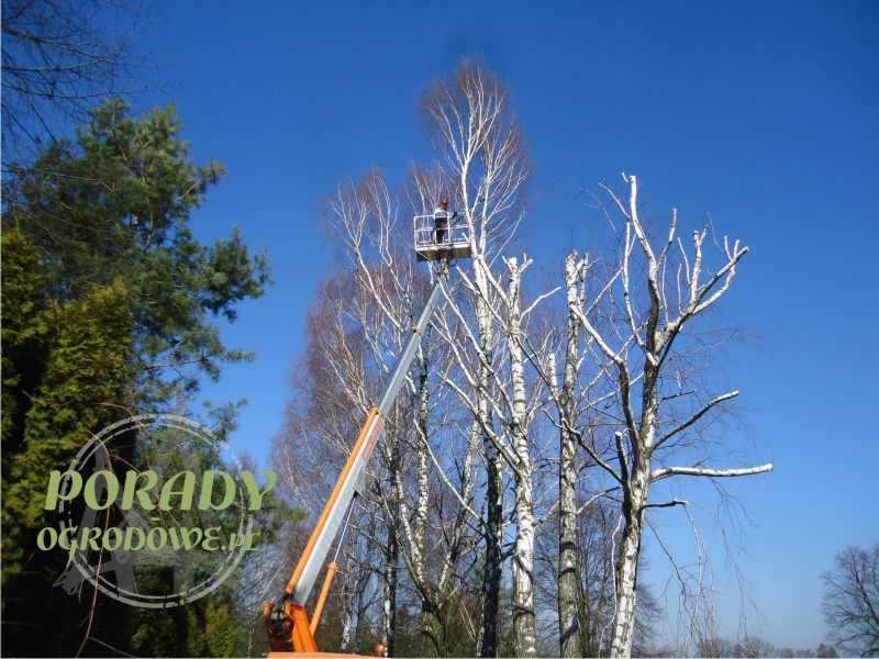 kara-za-wycinke-drzew_1