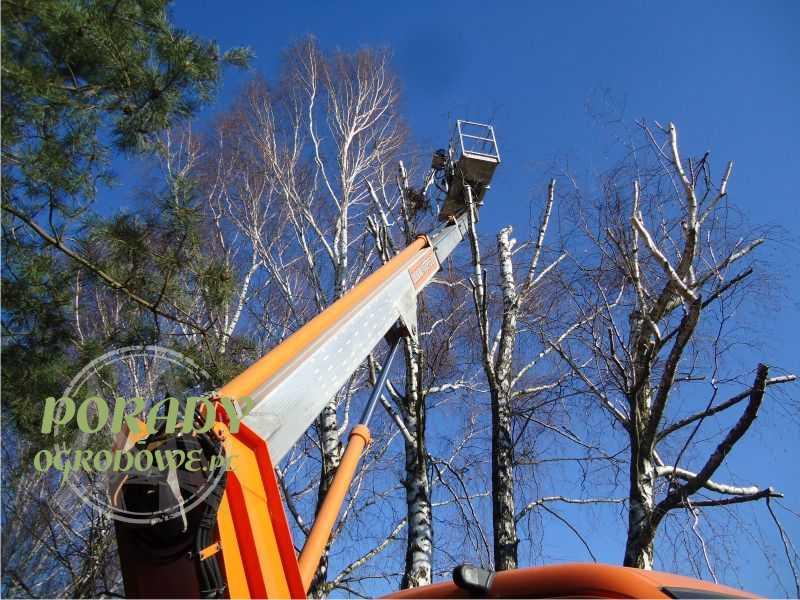 wycinka-drzew-nowe-przepisy-prawne