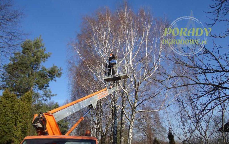 wycinka-drzew-porady