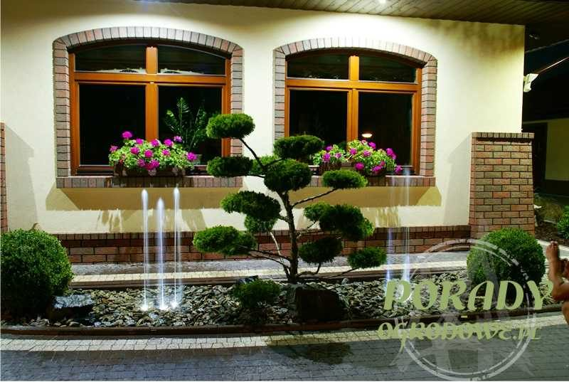 bonsai-i-water-trio-element-wodny