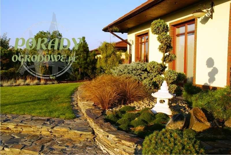 bonsai-w-ogrodzie