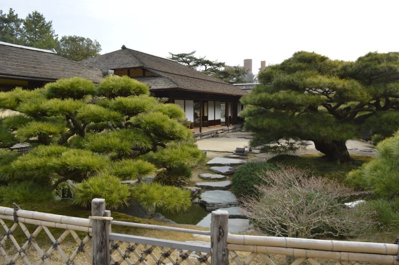bonsai-wymagania