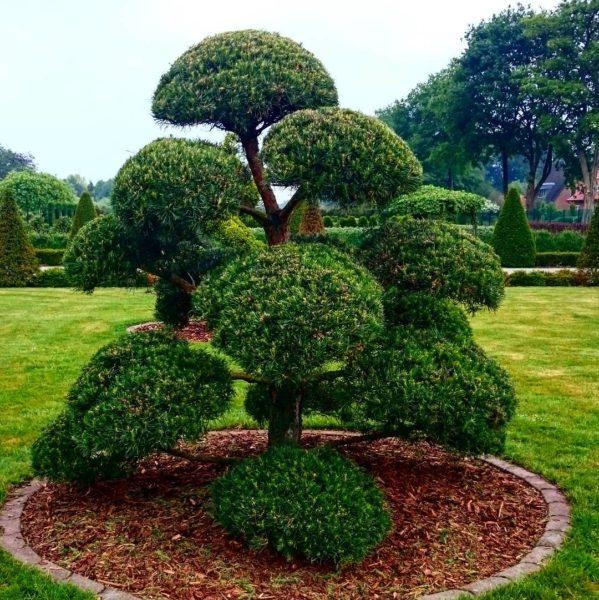 drzewko.bonsai