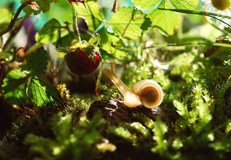 ślimaki w ogrod