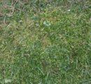 Skuteczne i praktyczne sposoby walki z mchem w trawniku