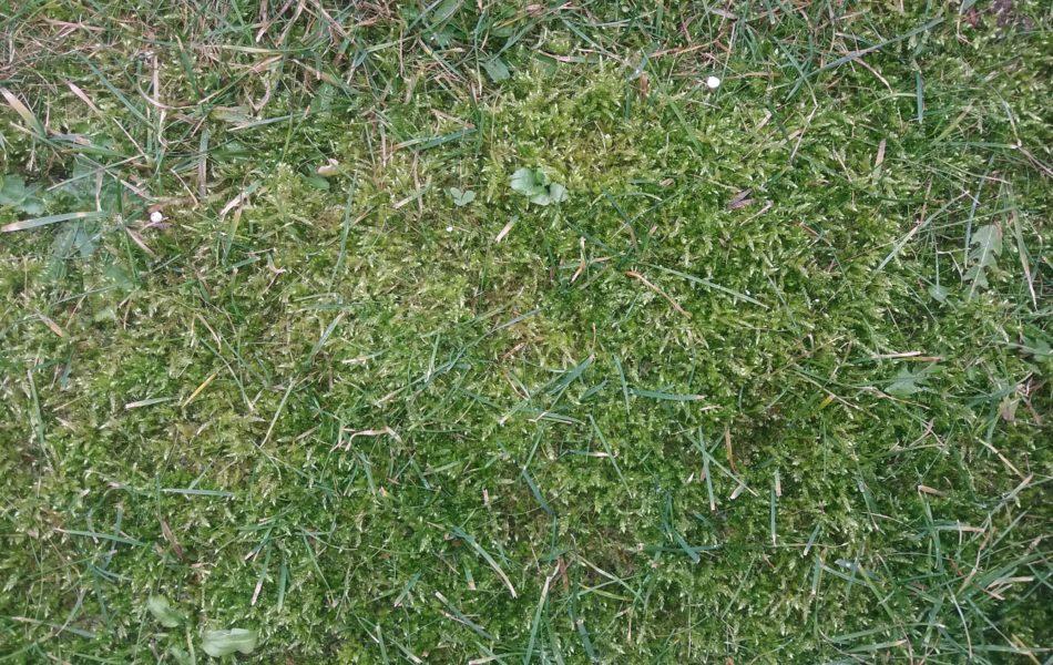 Jak pozbyć się mchu z trawnika. Mech na trawniku.Sposoby walki z mchem na trawniku.